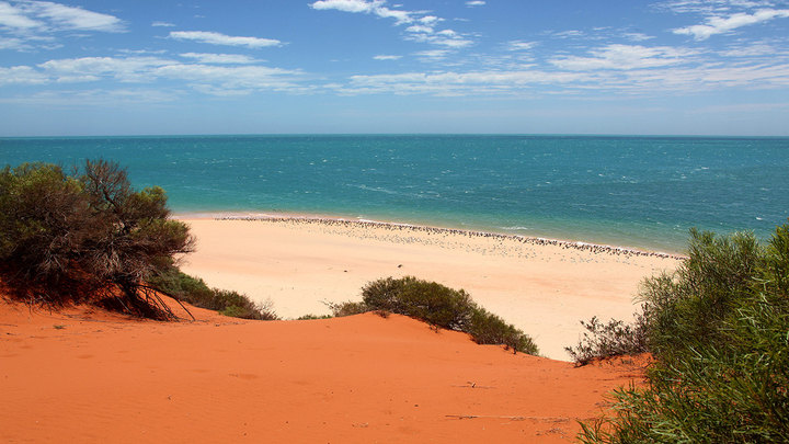 Shark Bay - Hamelin Pool
