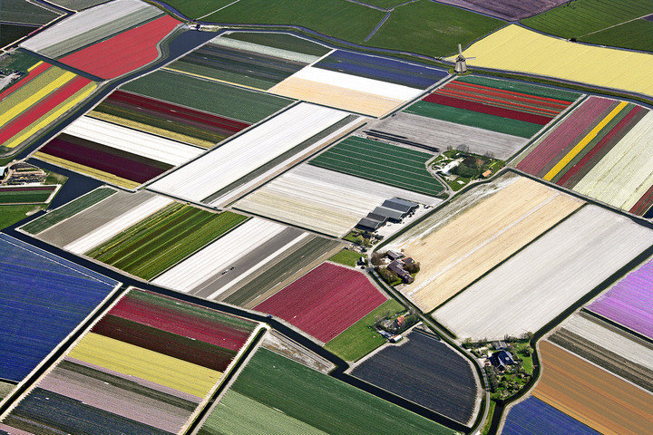 Amsterdam Tulips - Tulip bulbs fields aerial pictures -
