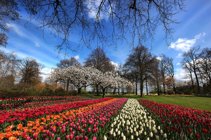 Amsterdam Flowers - Keukenhof Flower Exhibition -